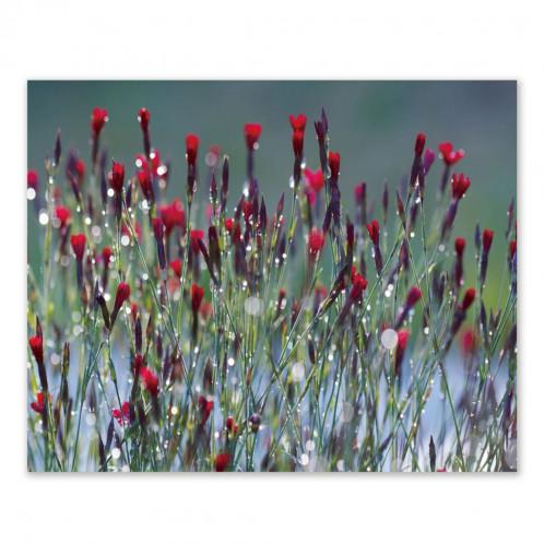 Cuadro impresión lienzo flores